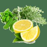 Liquidrezept Herbal Infusion